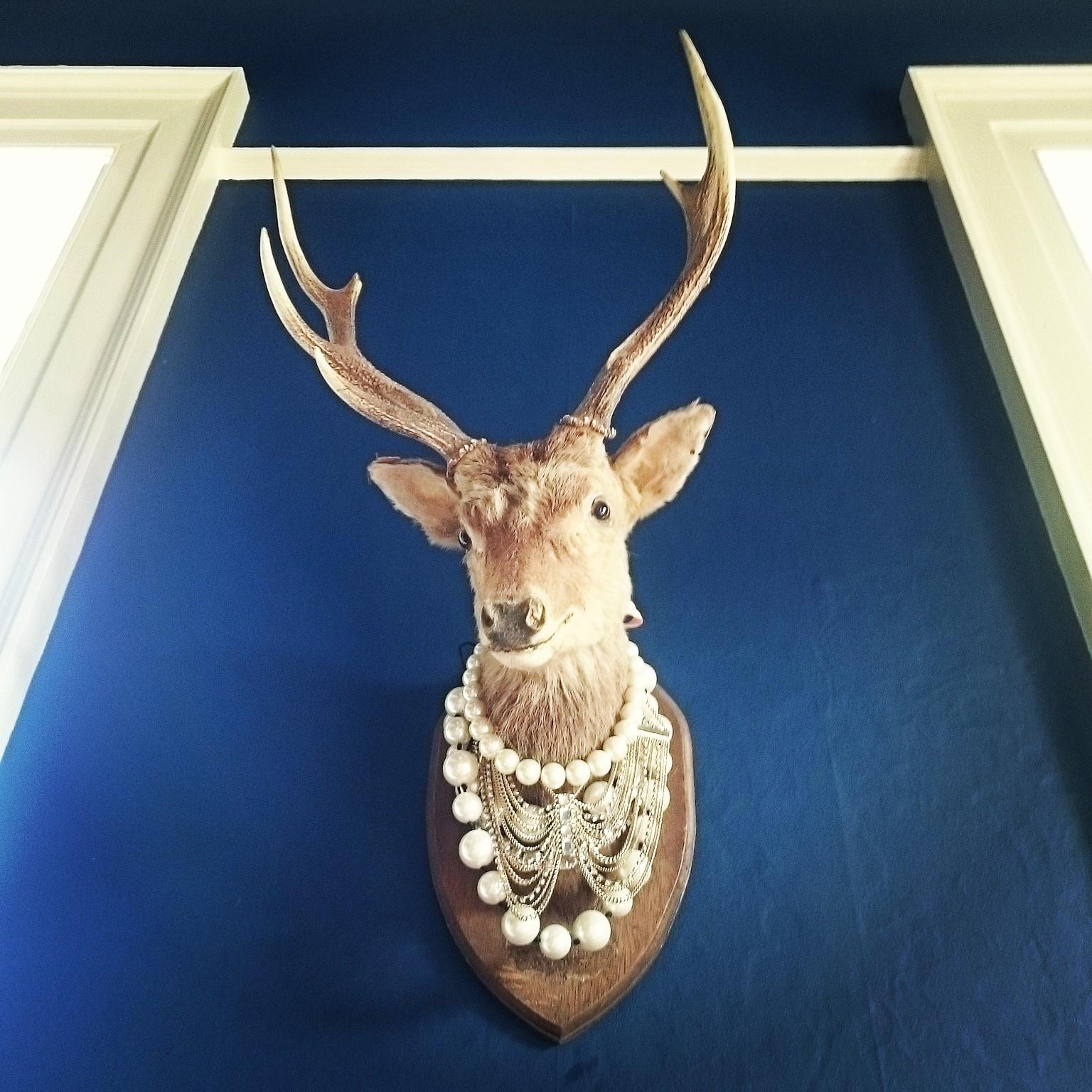 newton hall northumberland stag